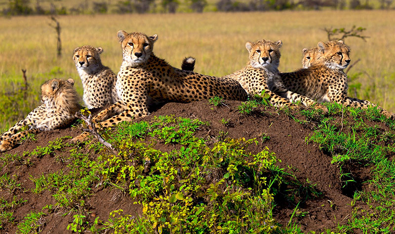 South Africa Vacations Luxury South Africa Safari Safaris