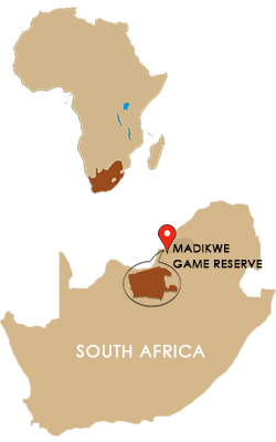 South Africa Map Game.Madikwe Game Reserve