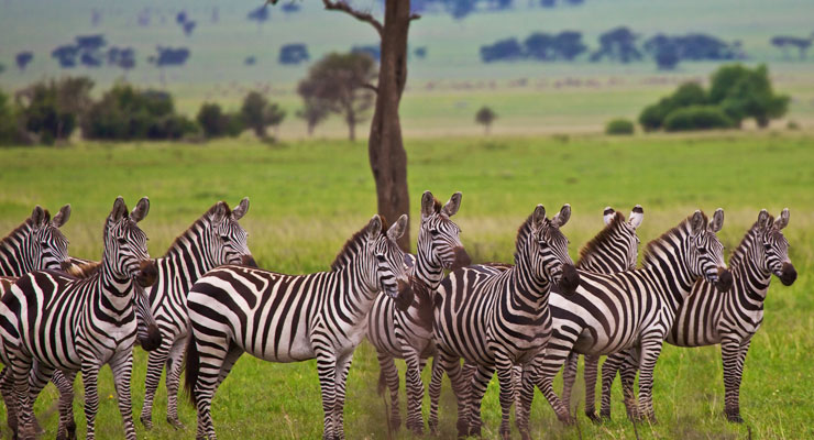 Top 10 Africa Safari Tours